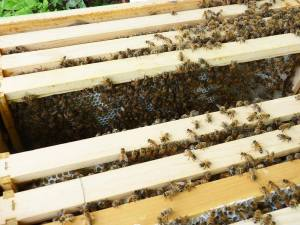A full hive with bees working