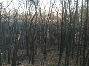 Fall forest at Samhain, nutrients stay in the soil