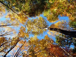 Fall foliage rising above...