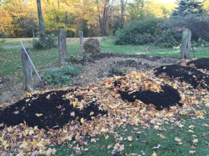 Sheet mulching with fall leaves