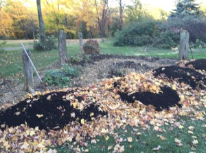 Late fall sheet mulch