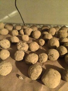 Seed balls drying out!