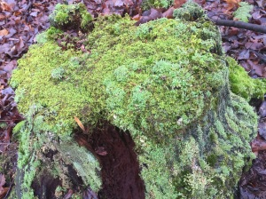 Nature healing a stump