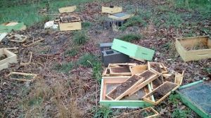 Destroyed Beehives