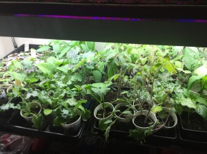 Happy seedlings get fertilized often!