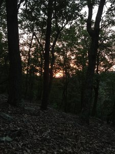 The sunrise peeking through the trees!