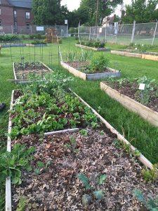 Community Garden plots!