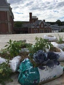 Rooftop garden beds!