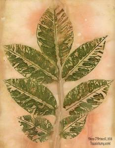 Print of ash tree leaf