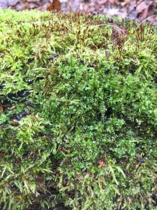 Incredible moss in late December
