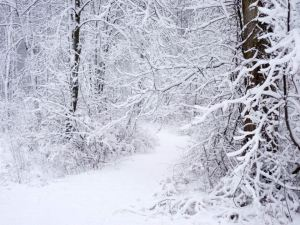 Leading deeper into the winter realms