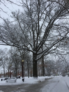 "Campus after my ""birthday"" snow :)"
