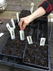 Early seed starting of key medicinal herbs