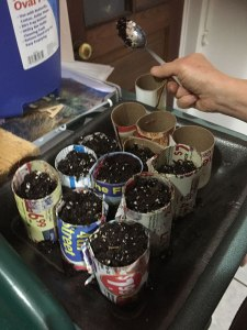 Filling the pots with soil!