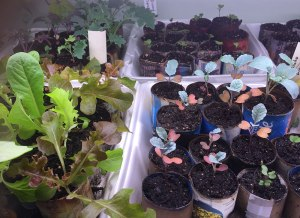 Seedlings growing in recycled materials!