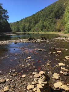 A river in the PA Wilds region--once a site of logging, now a site of regrowth