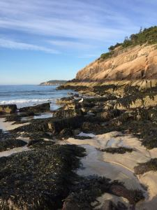 Bladderwrack along cliffs