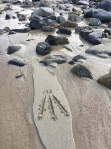 Connecting to nature at the rocky shore