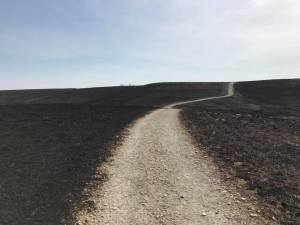Konza Prarie Recently Burned (March 2018)