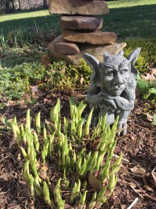 "The Gargoyle says, ""time for dinner! These hosta shoots are ready to harvest!"""