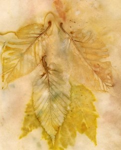 Birch Leaf Ecoprint