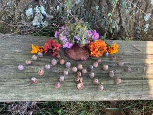 Offering gratitude to the oak with an offering