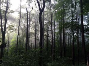 Deep Gratitude for a misty dark forest in the rain