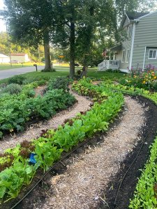 Front yard curves of lettuce, brassicas, herbs, onions, and more!