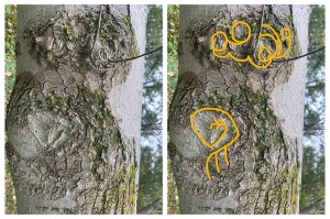 Two potential tree sigils from an interesting pattern in maple bark